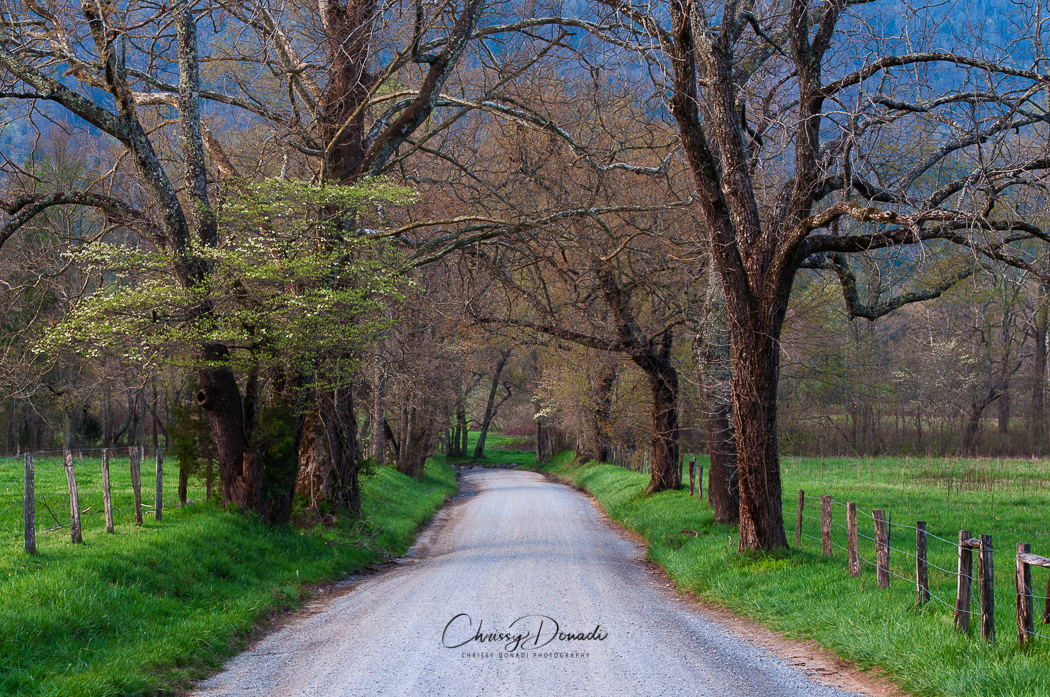 Landscape Photography of Sparks Lane in the Great Smoky Mountains National Park by Chrissy Donadi