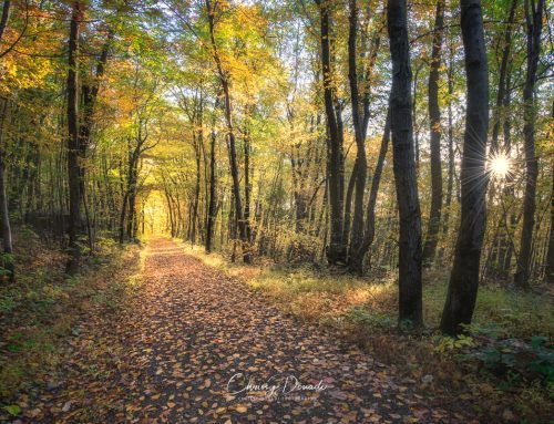 6 Essential Shooting Tips for Fall Photography