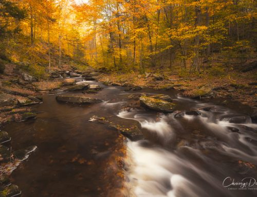 The Secret to Knowing When is Peak Fall Foliage in the Northeast United States