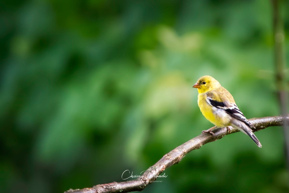 Nature and Bird Photography Blog Post Cover Image